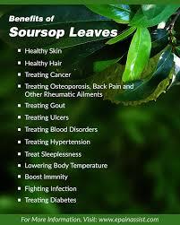 Benefits of taking soursop