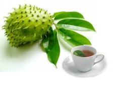 Soursop - could this be the new cancer drug?